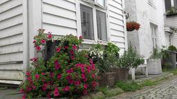 Norway Skudeviken Of Bergen house entry with blooming flowers Footage