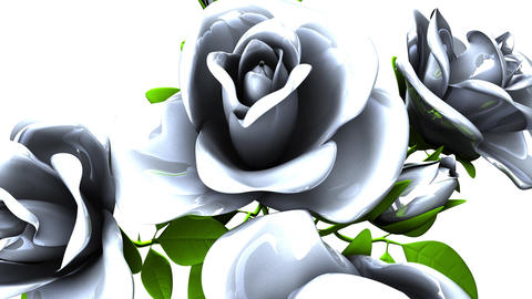 White roses bouquet on white background CG動画