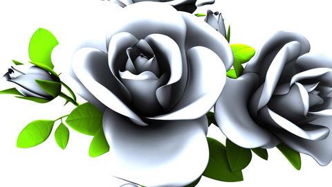 White roses bouquet on white background Animation