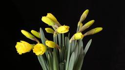 Blooming Flowers Footage