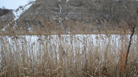 Closeup of old dry reed swaying in the wind Footage