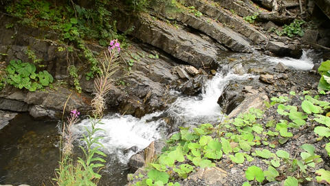 Beautiful mountain river with green vegetation and purple flower Footage