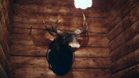 A stuffed animal on the wall Footage