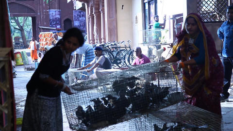 Birds selling in the Indian Market Footage