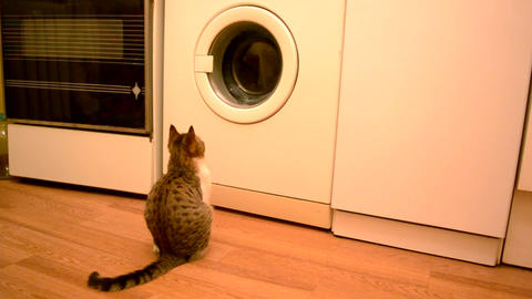 Young cat looking into working washing machine Footage