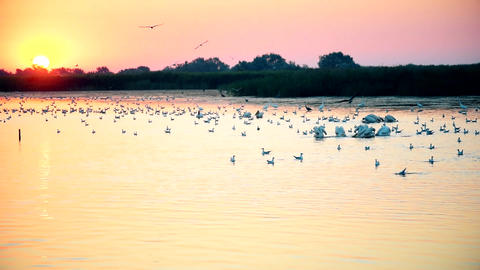 Woman makes photo of pelicans, herons, seagulls Footage