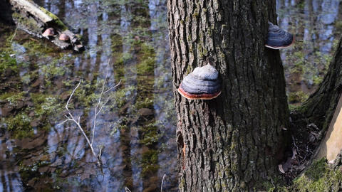 Colorful tree fungi on tree trunk near water Footage