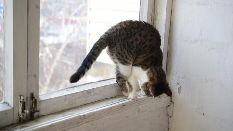 Cat walks on old narrow window sill Live Action