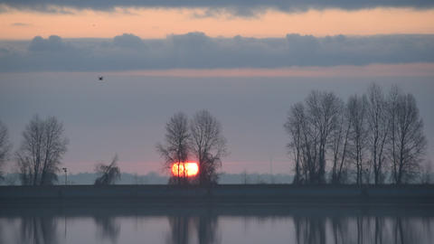 Bird flies over water through frame during sunrise Footage