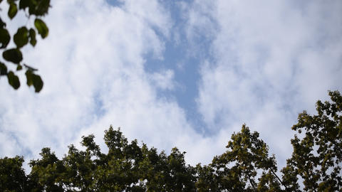 Clouds move over tops of trees in blue sky Footage
