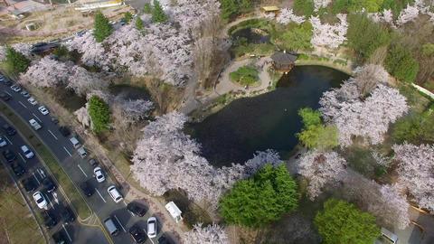Bomun Pond of Bomun Park at Gyeongju 02 Footage