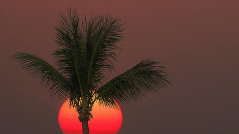 Close-up of a palm tree on a sunrise background. Time lapse Footage