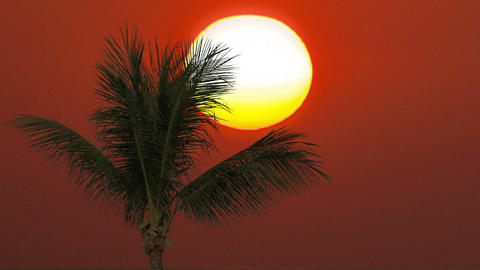 Sunny sunset and palm tree. Time lapse Footage