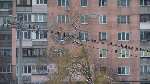 Flock of pigeons come down to electric wires Footage