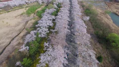 Spring of Bomun Park at Gyeongju 15 Footage