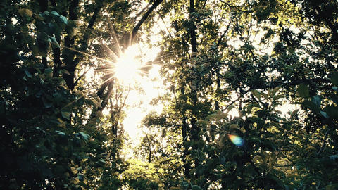 Golden sunshine with sun shining through tree foliage Footage