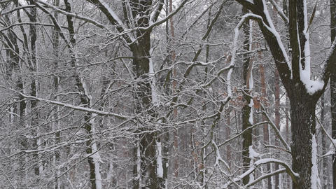Snow falling in winter on background of a leafless deciduous forest Footage