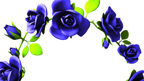 Blue roses frame on white text space CG動画