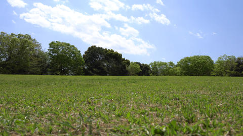 Green lawn surrounded by trees in park Live Action