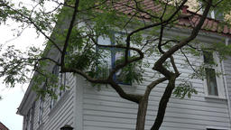 Norway Skuteviken Bergen corner of white Scandinavian house and a tree Archivo