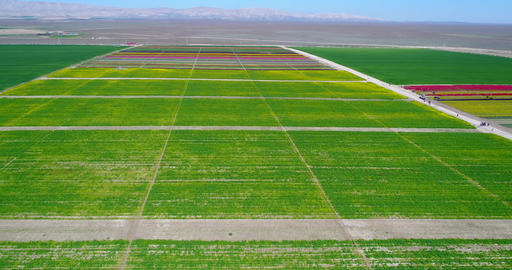 Aerial view with done of Tulip fields. Aerial of tulip field showing different Footage