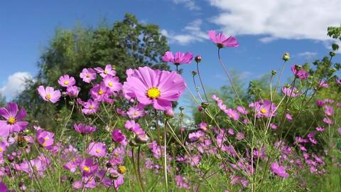 Flower garden in yunnan china Footage