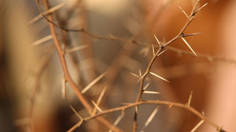 Macro succulent thorns Stock Video Footage