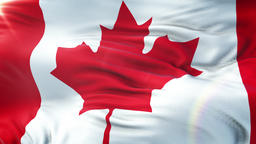 Flag of Canada waving on sun. Seamless loop with highly detailed fabric texture Animation