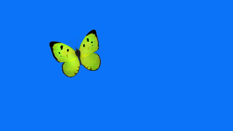 Green Butterfly Flying on a Blue Background Animation