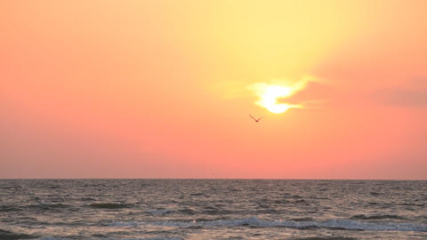 Seagull flies on background of rising sun over sea Footage
