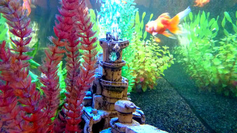 View into an aquarium with floating Goldfish Archivo