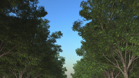 Loopable POV driving shot. Travelling along forest road motion background Footage