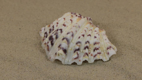 Rotations of the seashell lying on the dunes. Beauty in nature Footage