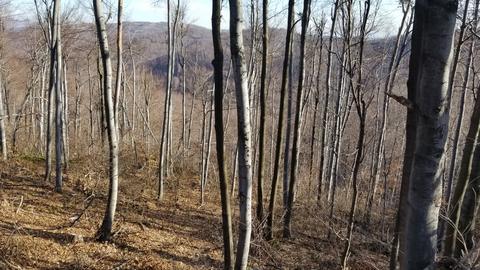 Autumn In A Forest Fotografía