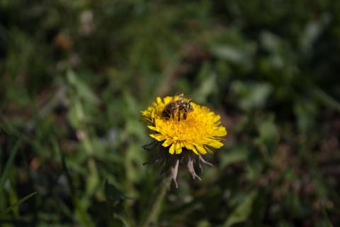 Bee フォト