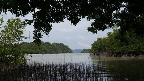 Mangrove at Double island, Port barton, Palawan, Philippines Footage