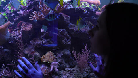 Woman watching the fish in the aquarium Footage