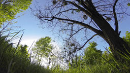 Green grass and trees blowing in the wind Footage