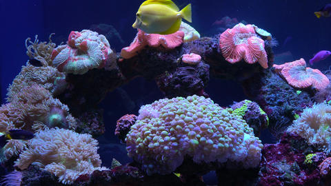 Bright fish swim in the aquarium Footage