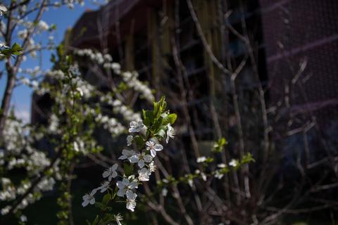 Close up of tree blossom Fotografía