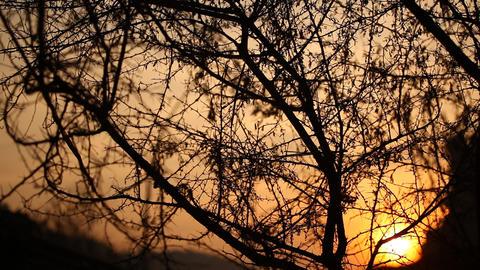 Macro succulent thorns Stock Video Footage
