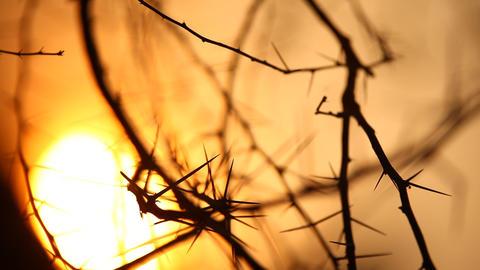 Macro succulent thorns Live Action