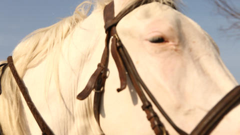 Horses at Rural area Footage