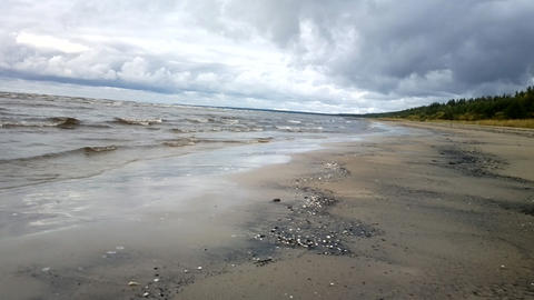 quiet waves go to sea shore and pine forest. Warm rainy winter Footage