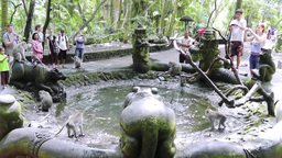 Monkeys are frolicing in the pool, Ubud, Bali Footage