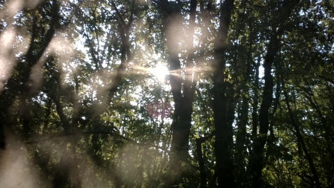 Sun rays playing through leaves and branches of forest Footage