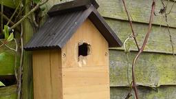 Blue tit bird house pecking bird Footage