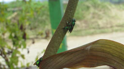 Insects nature bees pollinating Footage