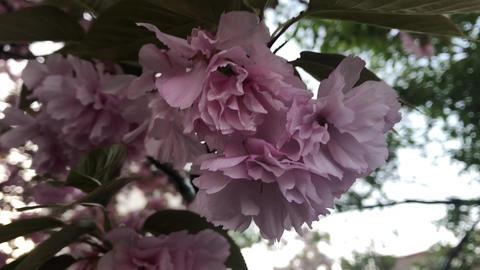 Sakura 02 Filmmaterial