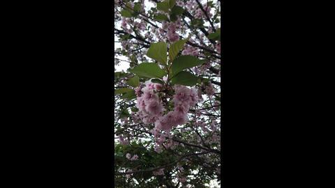 Sakura 10 Archivo